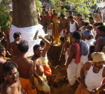 Lord Sudarsan's 'daru' tree falls on ground