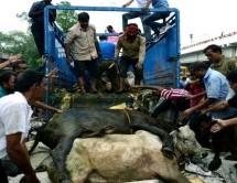 स्वयंसेवक की सतर्कता से आठ गायें कटने से बचीं