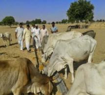 गायों को बचाना युगधर्म की पुकार है: संघ