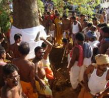 Lord Sudarsan's 'daru' tree falls on ground