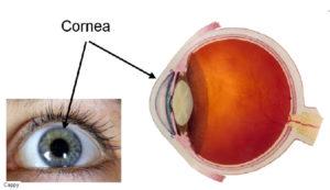 Cornea-of-Eye