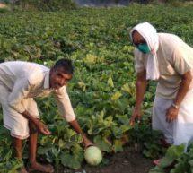 सामर्थ्य नहीं, दिल बड़ा होना चाहिए – किसान ने 2 एकड़ के खेत से अपनी आधी उपज जरूरतमंदों की सहायता के लिए दान की