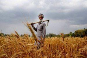 पंजाब के किसानों के खाते में लगभग 8,180 करोड़ रुपये सीधे स्थानांतरित किये गए