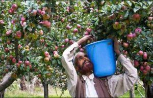 विकास की राह पर जम्मू कश्मीर – जम्मू-कश्मीर पंचायती राज कानून को स्वीकृति, 12लाख टन सेब की खरीद को भी मंत्रिमंडल की हां