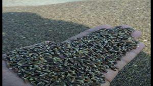 वाइस प्रिंसिपल की नौकरी छोड़ शुरू की काले गेंहू की खेती