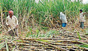 गन्ना किसानों को 3500 करोड़ की सहायता को अमित शाह ने बताया प्रतिबद्धता