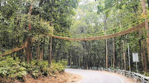 Uttarakhand – First of its kind eco-bridge to help reptiles cross busy jungle road