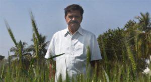 हैदराबाद – वेंकट रेड्डी ने विटामिन-डी से युक्त गेहूं-चावल की किस्म विकसित की